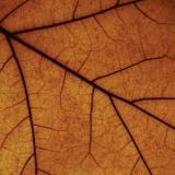 Paysage DHiver / Drudkh - Split ++ BLACK LP