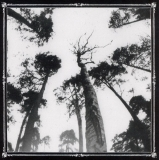 Ancestors Blood - When The Forest Calls ++ CD